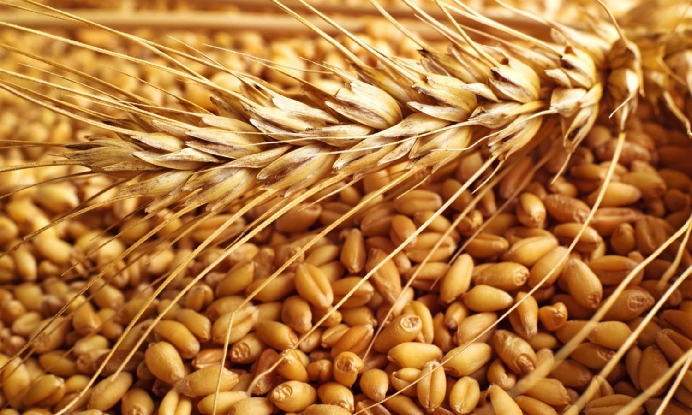 wheat sacks - 1000×668